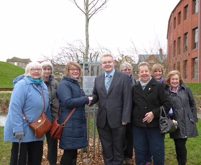 Liquidambar tree being planted in partnership with South Northants Council and Towcester Evening WI