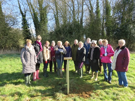 Chacome WI members around newly planted centenary tree